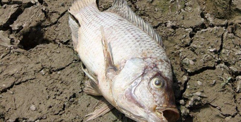 Der Fisch fault zuerst am Kopf